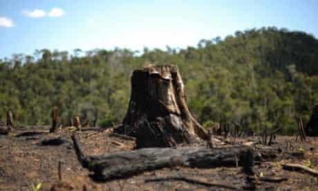Tree stump in Madagascar