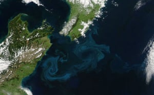 Satelitte eye on earth: phytoplankton off the east coast of New Zealand