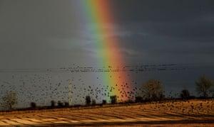 Starlings winter return: Starlings return for winter