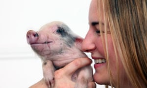 Emine Saner with Moonpig, an eight-week-old micro pig