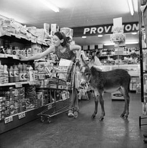 Miniature animals: A miniature donkey on a shopping spree to the supermarket
