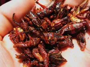 Been there photos: Crickets in chile