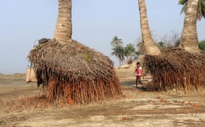 Week in wildlife: the roots of palm trees exposed due to erosion in The Sundarbans, India