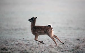 Week in wildlife: Early Morning Frost Is Seen over Richmond Park