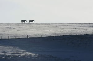 Snow in the UK: Horses cross snow-covered fields at Clayton near Brighton