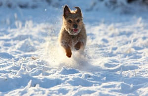 Snow in the UK: A dog runs in the snow at Hoxne, Suffolk