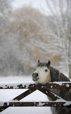 Snow in the UK: A horse looks over a fence covered in snow in Helperby