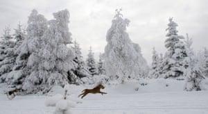 Snow around the world: Korenov, Czech Republic: A dog runs in a snow covered landscape