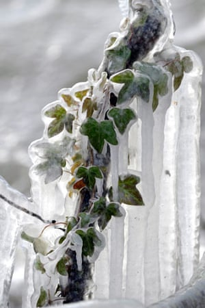 Snow: Switzerland: Plants covered with ice on the edge of Geneva Lake in Lausanne