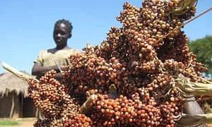 Katine resident Demita Ajemo holds up some of her sorghum harvest