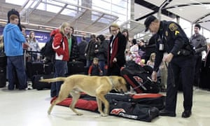 Sniffer dog, Detroit Airport