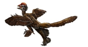 Science 2009: feathered dinosaur fossil, called Anchiornis huxleyi
