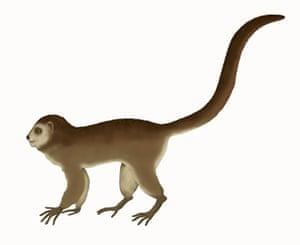 Science 2009: 47 million year-old skeleton of primate Ida