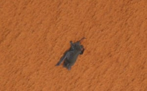 Science 2009: Free tail bat hanging on to space shuttle Discovery