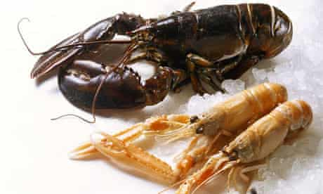 Fresh lobster and crayfish
