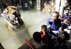 24 hours:  Year of the Tiger in Malabon Zoo,  Manila