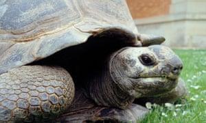 Kiki the tortoise