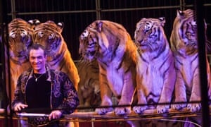 Christian Walliser and Bengal tigers