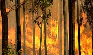 A bushfire burns in the Kiewa valley towards the town of Dederang, in Victoria.