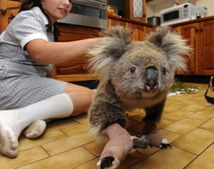 Australia fire aftermaths: Cheyenne Tree treats a Koala nicknamed Sam, saved from the bushfires
