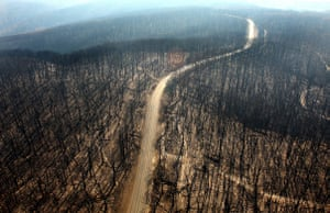 Bushfire devastation: A dirt track runs through the burnt out forest in the Kinglake region