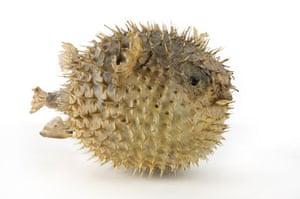 Take 10: Lost Property: Pufferfish?