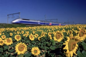 High speed trains: A speeding TGV train passes a field of sunflowers in France in 2002.