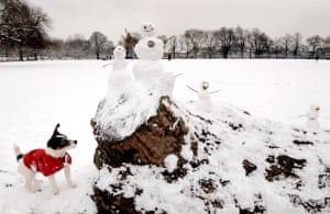 Gallery Snow update: Stoke Newington, London: A dog in the snow in Clissold Park.