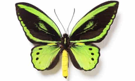 Rothschild butterfly collection