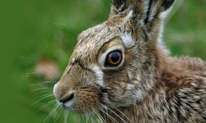 Farms wildlife schemes boots hares population