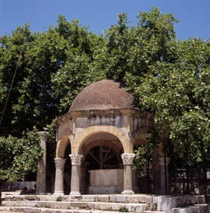King of the Forest: Plane Tree of Hippocrates, Kos
