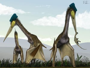 Gallery Dinosaurs: Giant dinosaurs, called Quetzalcoatlus
