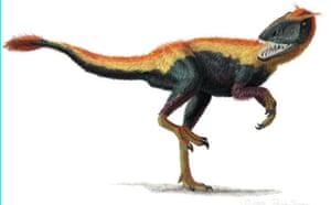 Gallery Dinosaurs: Dilong  paradoxus