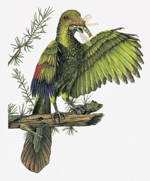 Gallery Dinosaurs: Archaeopteryx