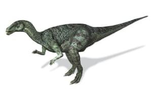 Gallery Dinosaurs: Camptosaurus