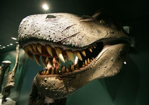 Gallery Dinosaurs: A woman inspects the head of a Tyrannosa