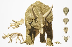 Gallery Dinosaurs: Triceratops
