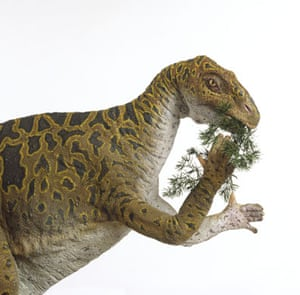 Gallery Dinosaurs: Iguanodon eating green plant