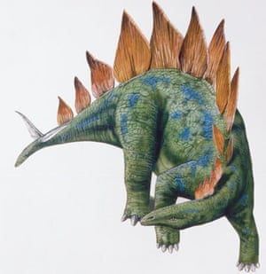 Gallery Dinosaurs:  Stegosaurus