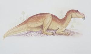 Gallery Dinosaurs: Maiasaura
