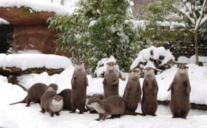 London zoo in snow