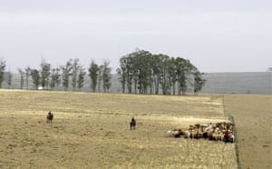Gallery Severe Drought: Uruguay - Economy - Farming - Cattle Ranchers