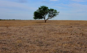 Gallery Severe Drought: Partial view of a grazing field dried up