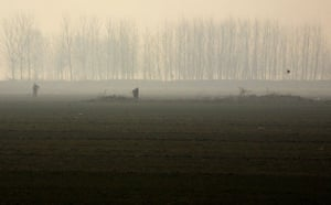 Gallery Severe Drought: Farmers work in an irrigated field planted with winter wheat crop