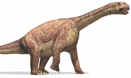 Camarasaurus or 'chambered lizard' dinosaur