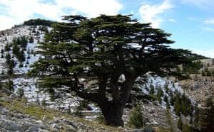 Gallery Week in wildlife: Lebanon-environment-climate-tree