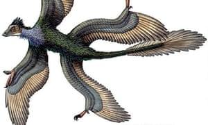 Four-winged dinosaur Microraptor gui
