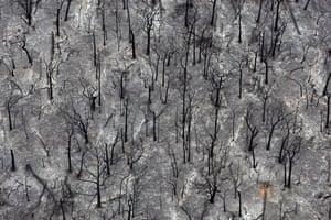 Gallery Australian fires: Burnt trees outside Kinglake