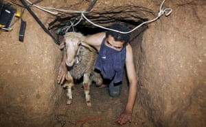 Gallery Tunnels under Gaza: Gaza tunnels a Palestinian smuggler moves a goat through a tunnel
