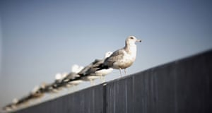 Week in wildlife: Birds are perched on wall in Hollywood